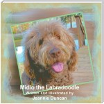 Midlo the Labradoodle
